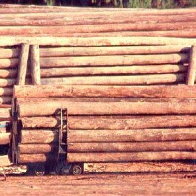 Madeira de eucalipto tratado em Itu - SP